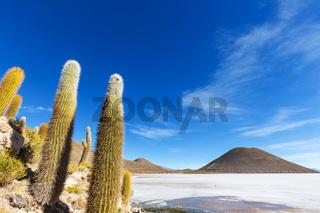 Cactus in Bolivia