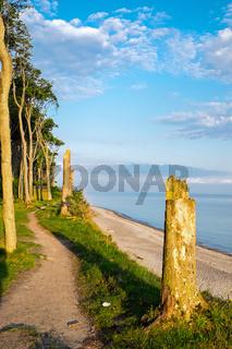 Wald an der Ostseeküste