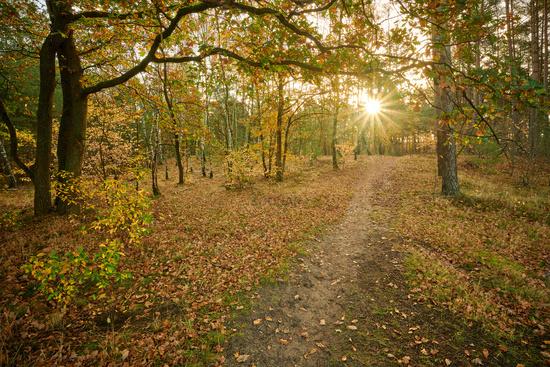 sunrise German forest