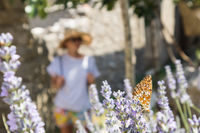 Out of focused image of young female traveler wearing straw sun hat enjoying summer on Mediterranean cost strolling among lavander flowers on traditional costal village garden.