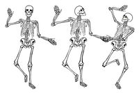 Funny dancing skeletons isolated on white background.  illustration, set
