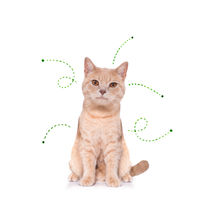 cat kitten   with fleas, ticks or insects