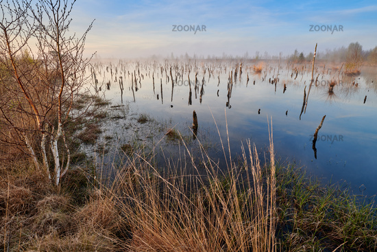 Peat bog Germany