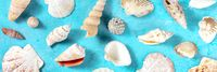 Ocean panorama with sea shells, shot from above on a vibrant blue background