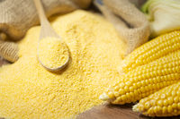 Ripe young sweet corn cob spoon and cornmeal close up