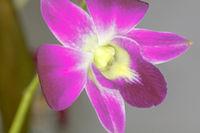 Plant portrait - orchid