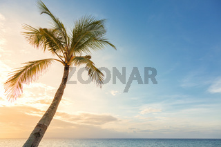 Background of sunset sky with lonely coco palm tree