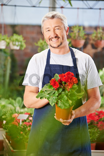 Gärtner mit Begonie in Gartencenter