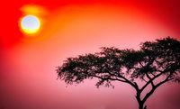 Sunrise at Murchison Falls National Park Uganda