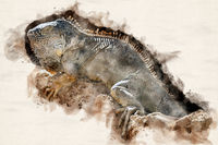 Watercolor Illustration Iguana