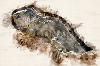 Watercolor Illustration Iguana