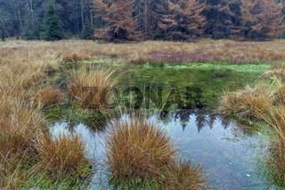 Herbststimmung in einem Moor im Wald