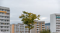 Block apartments in gloomy weather and a single tree in autumn