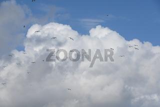 Möwen vor einer Wolke