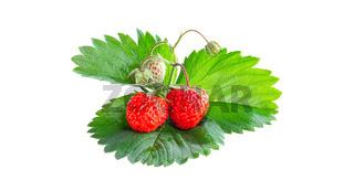 Ripe strawberries