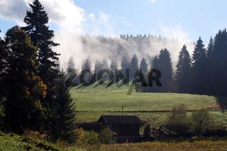 zauberwald black forest