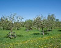 meadow orchard in Urdenbacher Kaempe Nature Reserve,Duesseldorf,Germany