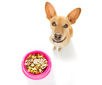 hungry dog with food bowl