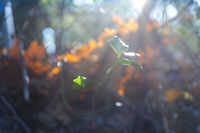 Single tree sprout in the backlight