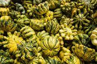 Halloween pumpkin agricultural season festival