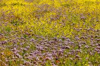 Flower meadow for insects