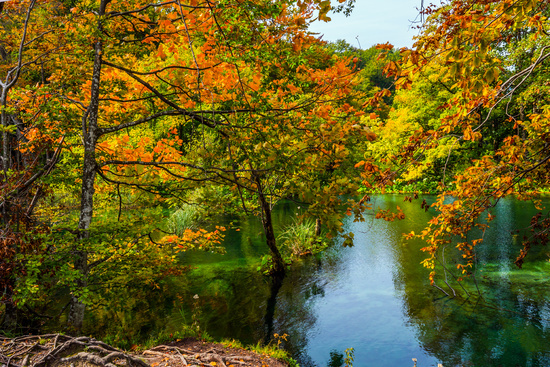 Red orange leaves of autumn trees