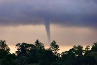 Formation of a tornado on sea in tropics against background of jungle.