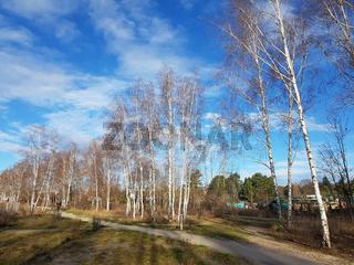 Mauerweg und junge Birken im Norden von Berlin an einem sonnigen Wintertag