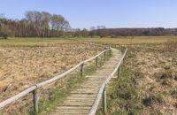 Hiking trail through the Schopflocher Moor, landscape, spring, April