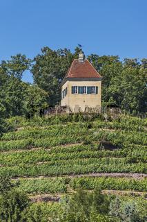 Minckwitzscher Weinberg | Minckwitzscher vineyard