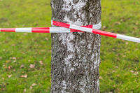 Barrier tape on a birch tree with a meadow in the background