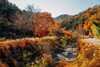 Autumn of Tongdosa temple mountain forest in Yangsan, Korea