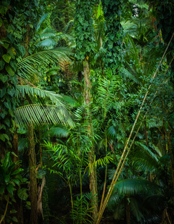 Thick Tropical Jungle Background