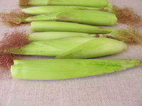 Young corn ears in husk leaves from the garden