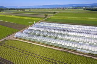 Gewächshäuser und Flächen für Freilandanbau von Gemüse im Gemüseanbaugebiet Seeland - Grosses Moos
