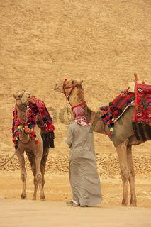 Bedouin with camels near Pyramid of Khafre, Cairo