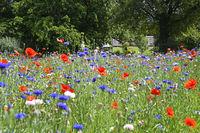 city meadow in prinz-emil-garden in darmstadt (hessen / germany)