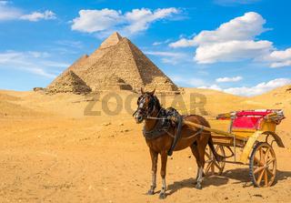 Horse near pyramids
