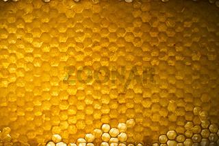 Honey in frame.