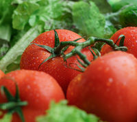 Healthy food. Photo of ripe tomatoes and lettuce