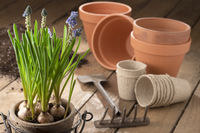 Gardening in spring - early bloomers and planting pots on wood