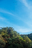 Birds circling over the forest