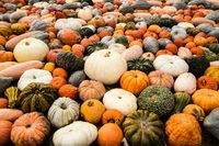 Halloween many different pumpkin sorts