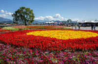 tourists and flowers at Xinshe flower festival