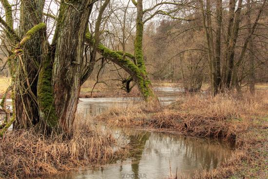 The Waldnaab near Falkenberg