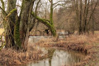 Die Waldnaab bei Falkenberg