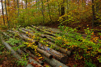 pile of wood in the autumn forest