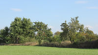Field border with old fruit trees in September