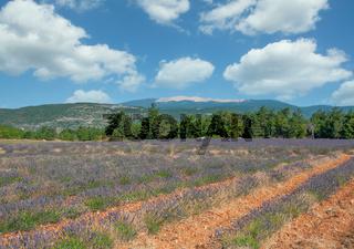 Blick zum Mont Ventoux,Provence,Frankreich