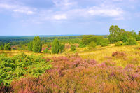 Lüneburger Heide im Herbst, Aussicht vom Wilseder Berg - landscape Lueneburg Heath in autumn near Wilsede, view from the hill